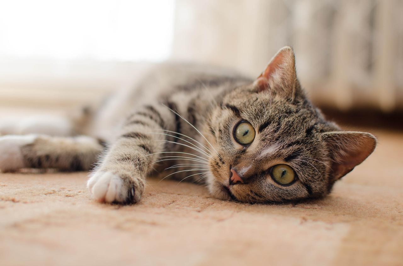 Pressreader Koleksiviral Channel Gambar Kucing Comel Dan