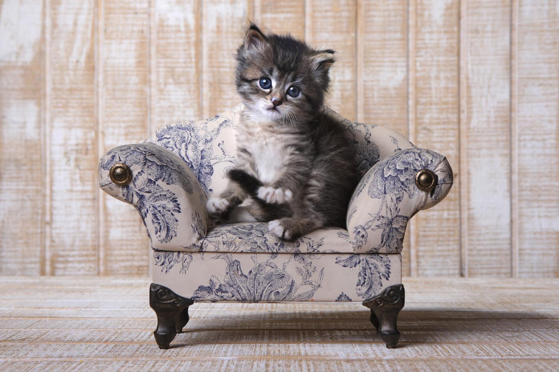 Download 64+  Gambar Kucing Yang Sangat Lucu Terlihat Keren