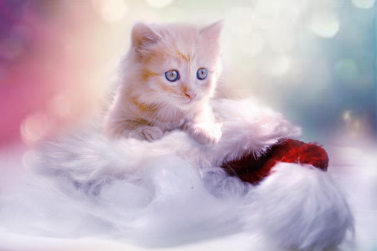 Wallpaper Gambar Kucing Yang Comel Kucingcomel Com