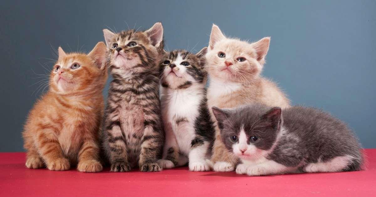 Download 68+  Gambar Kucing Tanpa Warna Paling Keren