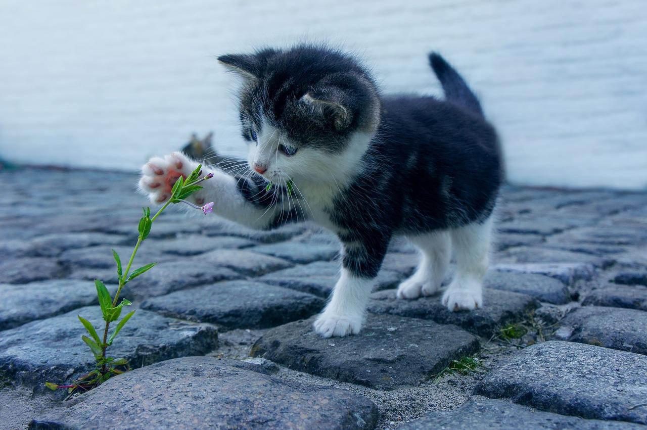 Unduh 63+  Gambar Kucing Lucu Hd Paling Bagus